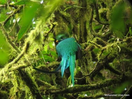 Monteverde_Costa-Rica-527x396