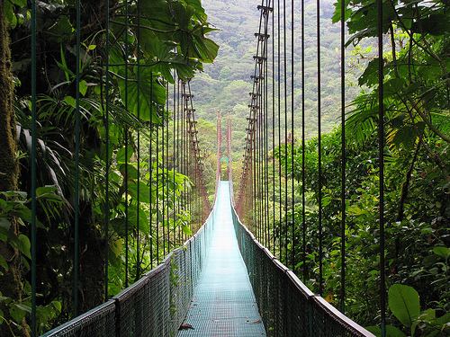 Moteverde_Cloud_Forest_Reserve_Costa-Rica