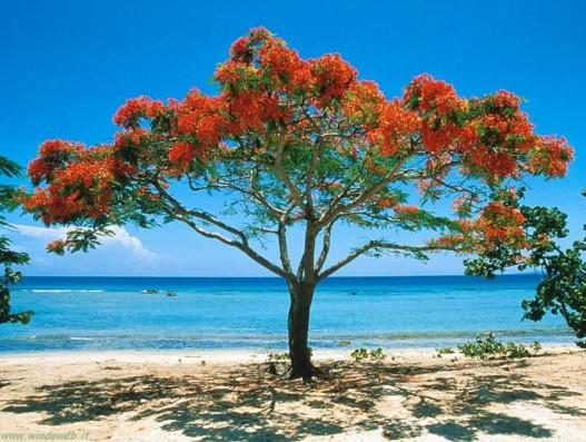trinidad-cuba-beaches