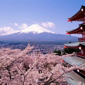 tokyo_cherry_blossoms