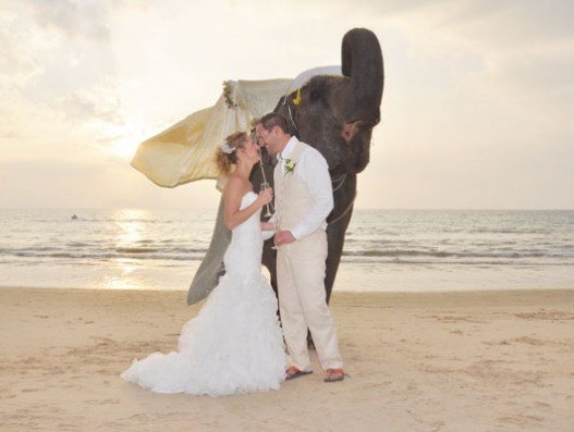 Elephant-Beach-Wedding