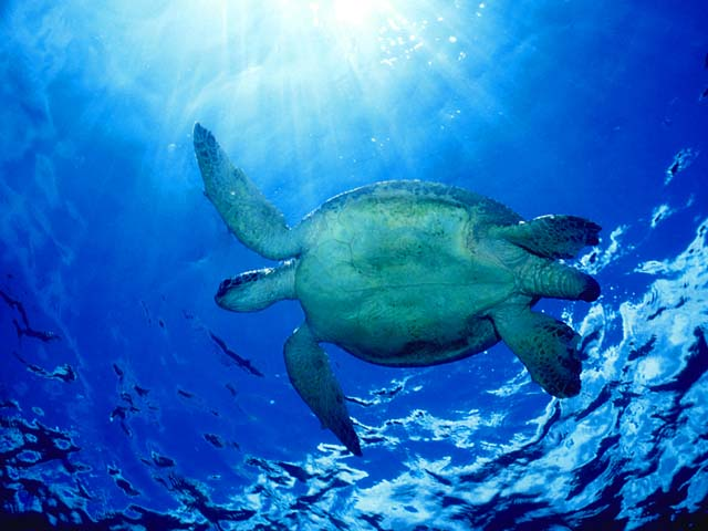 turtle2_malaysia