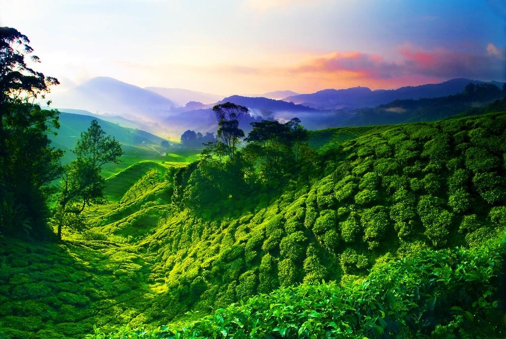 Cameron_Highlands_malaysia2