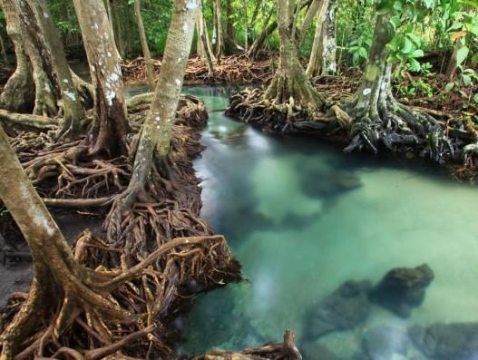 Langkawi Cave & Mangrove Tour Malaysia Asia Banita Tour