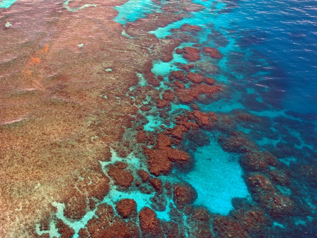 Langkawi Coral's reef platform malaysia asia diving banita tour