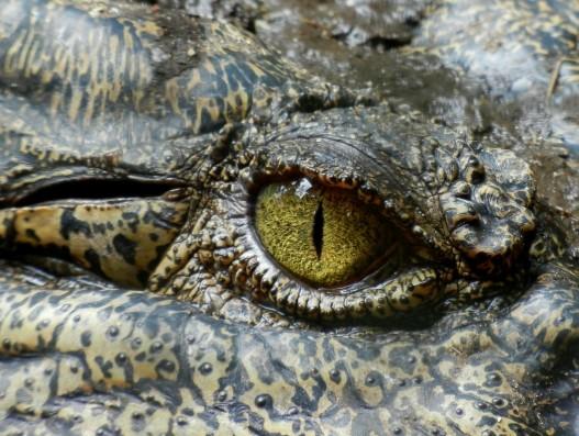 crocodile farm malaysia lankgawi aisa banita tour operator