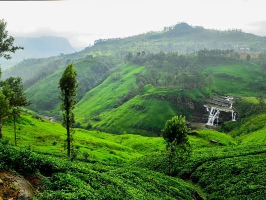 NUWARELIYA Sri Lanka Asia Banita Tour Tea Plantation