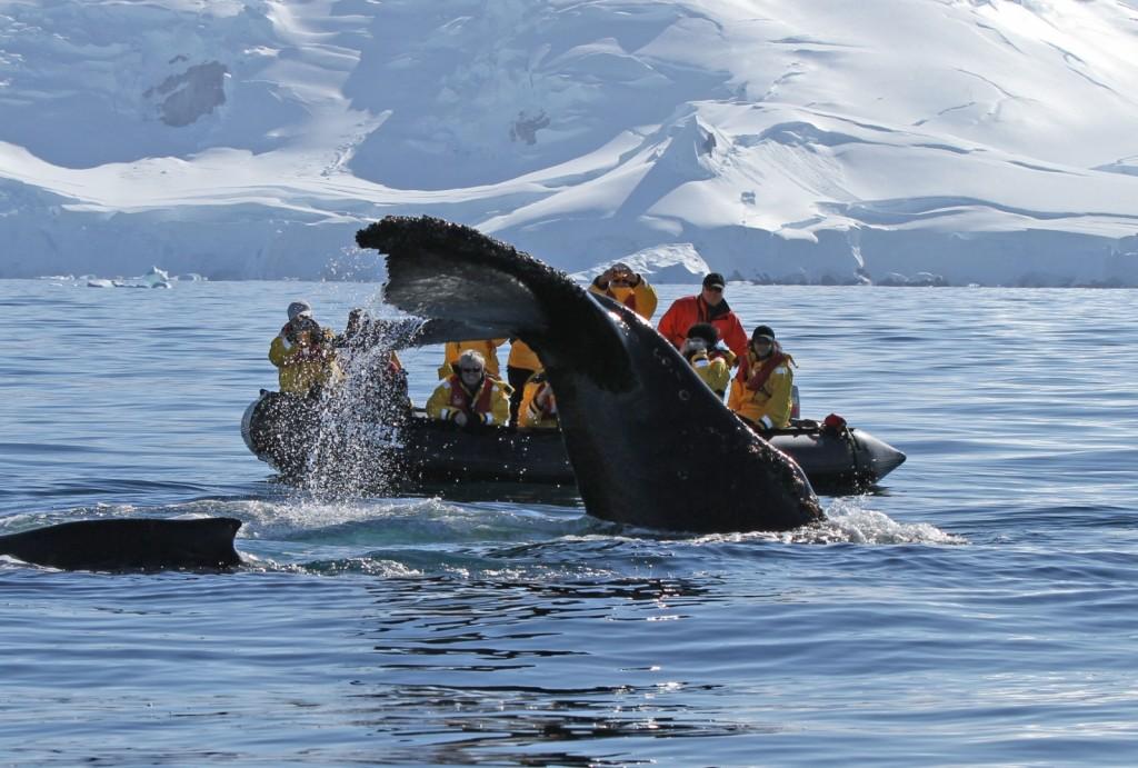 Drake Passage, Antarctica Banita Tour Whale Boat Tourists Ice