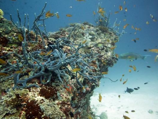 Maldives Snorkelling trip, Excursion, vacation, banita tour, Sale