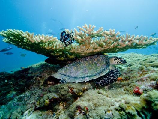 coral, sea, ocean, underwater, diving, maldives ,Banita tour