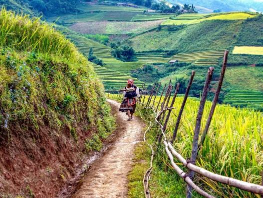 the mother, child, a village, road, scenery, the way home, jasmine, lao cai, vietnam, terraces, sunlight , Banita tour